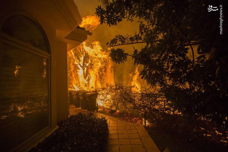 2382914 - مرگبارترین آتش سوزی جنگلهای کالیفرنیا