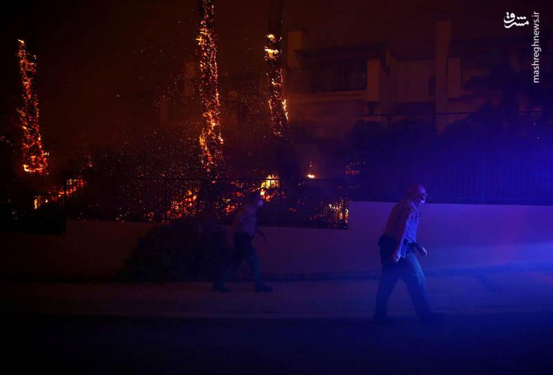 2382916 - مرگبارترین آتش سوزی جنگلهای کالیفرنیا