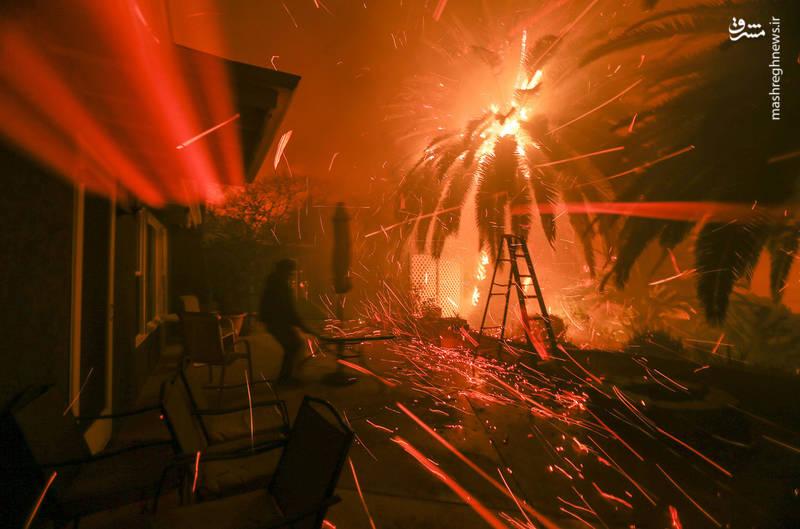 2382920 - مرگبارترین آتش سوزی جنگلهای کالیفرنیا