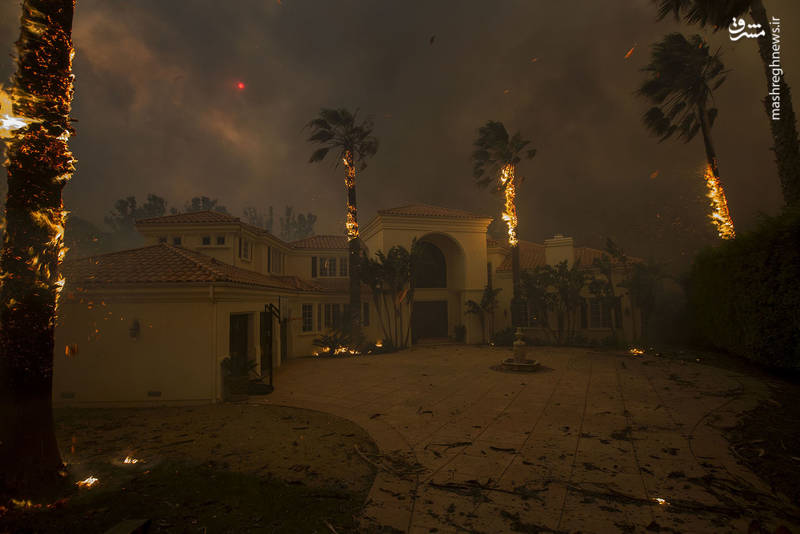 2382928 - مرگبارترین آتش سوزی جنگلهای کالیفرنیا
