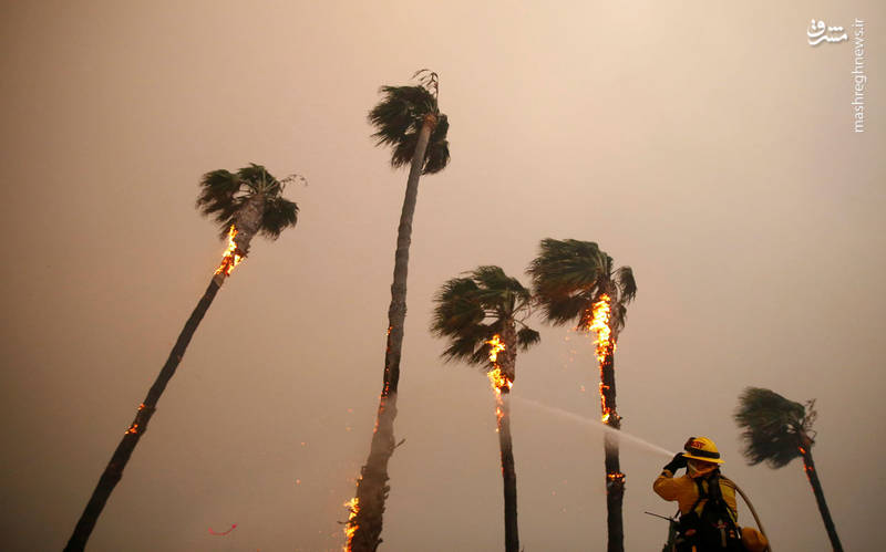 2382933 - مرگبارترین آتش سوزی جنگلهای کالیفرنیا