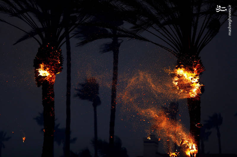 2382935 - مرگبارترین آتش سوزی جنگلهای کالیفرنیا