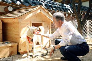 عکس/ هدیه «اون» به رئیس جمهور کره جنوبی
