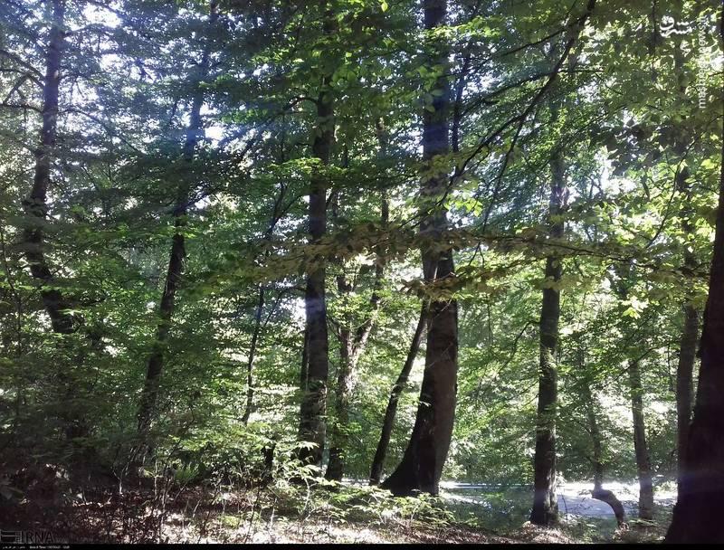 جنگلهای زیبای شمال «دامغان»