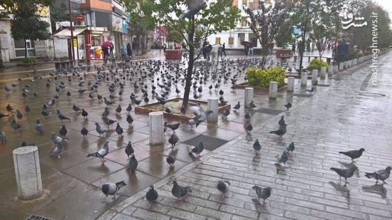 عکس/ نمایی زیبا از شهر رشت