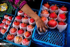 برداشت انار صادراتی در «ایج» استهبان شهرستان