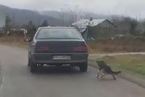 فیلم/ حیوان آزاری توسط راننده سنگدل!