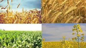 اعلام نرخ خرید تضمینی محصولات کشاورزی +جدول