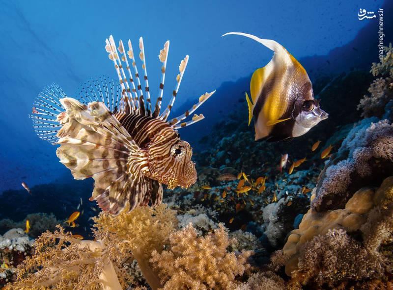 موجودات شگفت انگیز اعماق اقیانوس