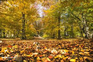 عکس/ فصل رنگ ها
