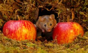 دهکده موشها