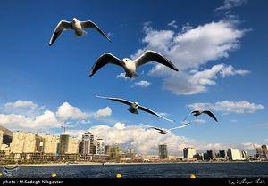 عکس/ پرندگان مهاجر دریاچه شهدای خلیج فارس