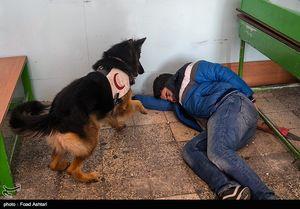 عکس/ مانور ایمنی مقابله با زلزله در مدارس تهران