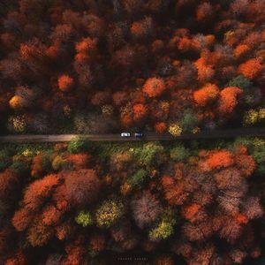 تصویری بینظیر از جنگلهای مازندران