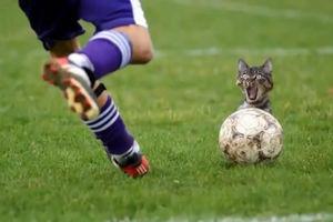 فیلم/ اتفاقی عجیب در یک مسابقه فوتبال!