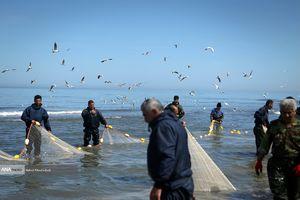 عکس/ صید پّره در دریای خزر