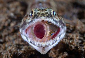 عکس/ آخرین لحظات زندگی یک ماهی