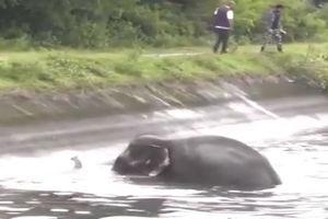 فیلم/ روش جالب نجات فیل گرفتار در کانال آب!