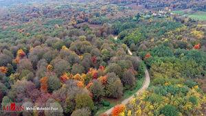 عکس/ چهره پاییزی جنگلهای ساری