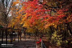 سمفونی رنگها در آستانه زمستان