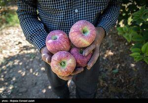 ممنوعیت صادرات سیب و پرتقال لغو شد