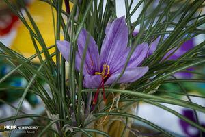 رشد ۴۶درصدی صادرات زعفران در سال جاری