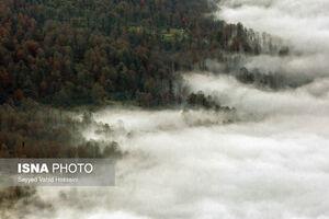 عکس/ پاییز در آشیانه عقاب
