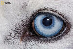 عکس/ نمای نزدیک از چشم شترمرغ