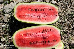 هندوانه ارزانترین میوه بازار شد +جدول