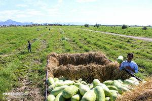 چرا کشاورزی ایران سودآور نیست؟