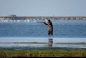 عکس/ شکار قانونی پرندگان مهاجر در گلستان