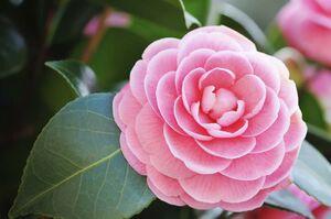 عکس/ گیاهانی که در فصل سرما هم گل میدهند