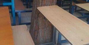 درختی که با دانشآموزان درس میخواند +عکس