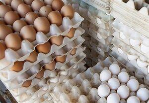 کاهش ۱۷ درصدی قیمت تخم مرغ در بازار
