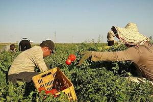 فیلم/ چند درصد از نیازهای کشاورزی در داخل تولید می شود؟