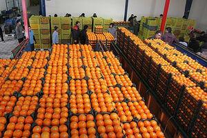قیمت پرتقال شب عید اعلام شد