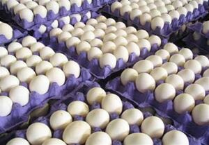 عرضه انبوه تخم مرغ «پوسته سفید» و «پوسته قهوهای» در میادین میوه و تره بار/تخم مرغ تنظیم بازار در میادین میوه و تره بار؛ هر عدد ۴۶۰ تومان