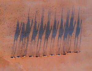 عکس/ کاروان شترها