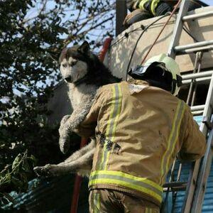 نجات جان یک سگ از حریق