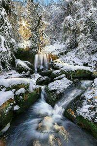 عکس/ چهره زمستانی جنگلهای رامسر