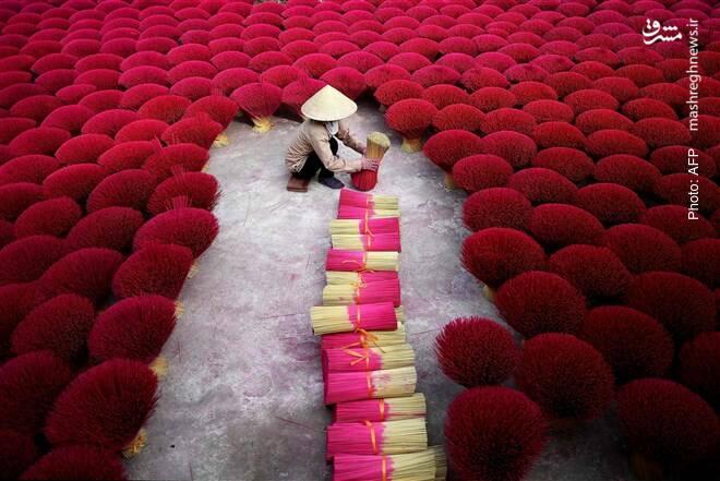 آماده کردن عودهای معطر از پوست بامبو در هانوی