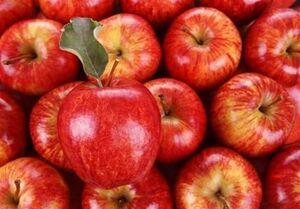 آغاز ذخیره 25  هزار تن سیب برای تنظیم بازار شب عید