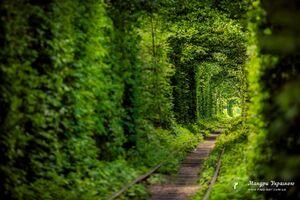عکس/ تونل عشق کجاست؟