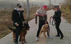جزییات حمله دو سگ به دختر ۱۰ ساله در لواسان +عکس