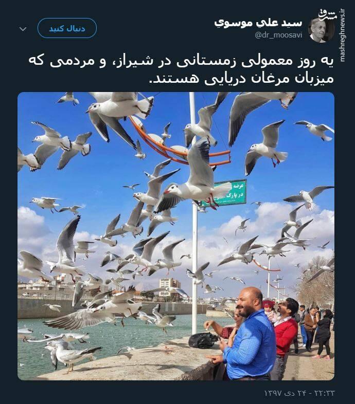 میزبانی مردم شیراز از مرغان دریایی +عکس