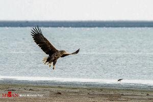 عکس/ میانکاله، بهشت پرندگان  ایران