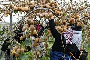آخرین وضعیت قیمت میوه در بازار