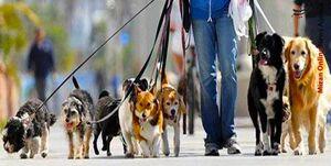 سگ گردانی در پارکهای لواسان ممنوع شد +سند