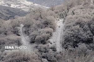 عکس/ طبیعت برفی دودانگه