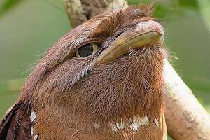 عکس/ استتار جالب یک پرنده!